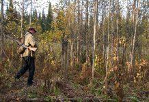 Les chasses traditionnelles