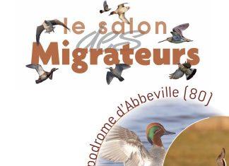 Le salon des migrateurs