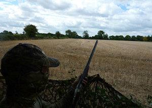 chasse pigeon affut