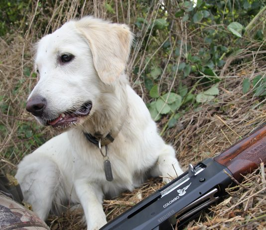 chasse-benelli-colombo