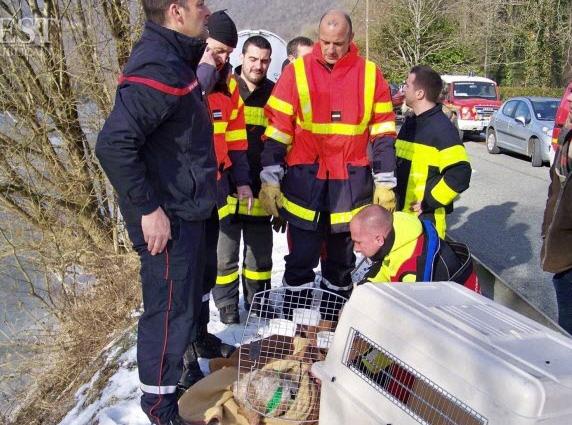 pompiers-chien