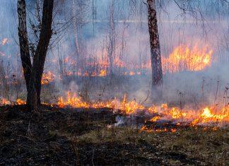 incendie-degats-gibier-faune