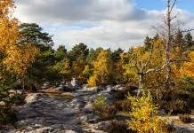 Chasse en licence dirigée par l'ONF en forêt domaniale de fontainbleau