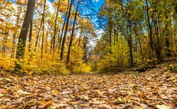 Chassez en licence dirigée par l'ONF en forêt domaniale de lyons la forêt