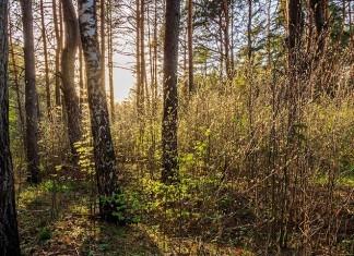 Chasse en licence dirigée par l'ONF en forêt domaniale de Montmorency
