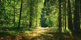 Chasse en licence dirigée en forêt Domaniale de Sénart