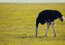 Accident de chasse : faire l'autruche ou informer ?