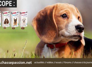 Bravecto, un poison pour votre chien ?