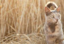 Australie : les chats un fléau qui tuent 1 million d'oiseaux par jour