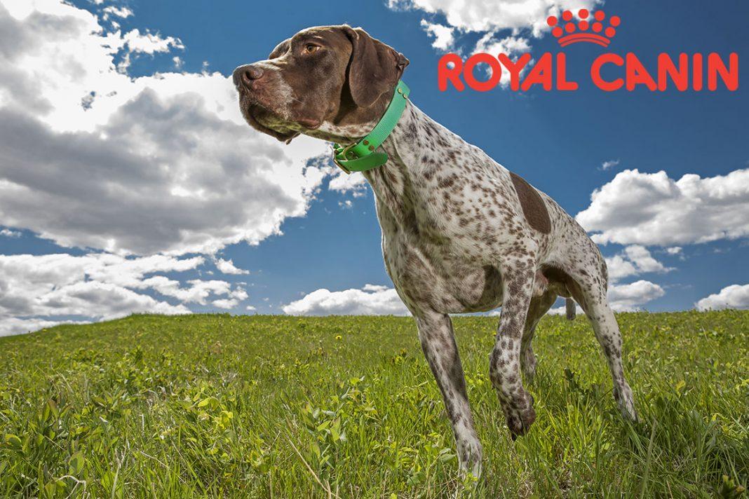 Non, Royal-Canin n'a pas l'intention de stopper son engagement dans la chasse !