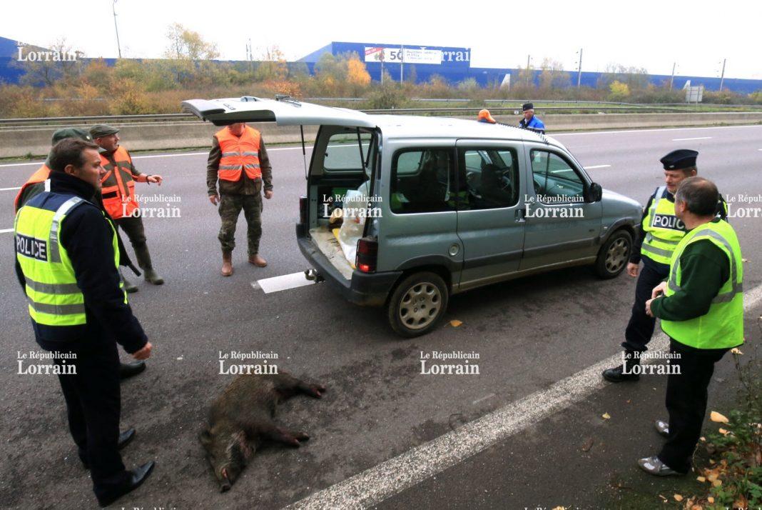 Vidéo : des lieutenants de louveterie appelés pour un problème de sanglier sur l'autoroute