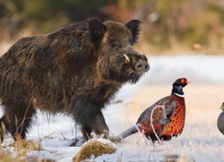 La chasse par temps de neige