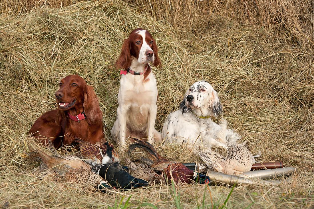 Quels sont les chiens autorisés à la chasse