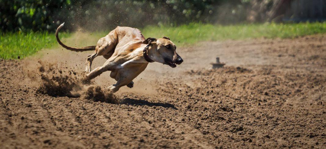 les chiens interdits à la chasse