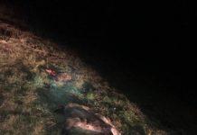 Une compagnie de sangliers provoque 3 accident sur l'A660