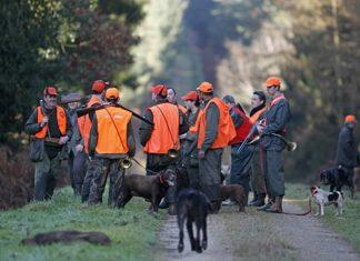 Béarn, 150 chasseurs attendus pour une battue géante