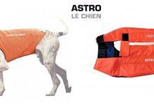 Astro le chien : nouveaux gilets de protection pour chiens de chasse