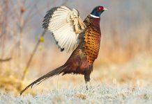 Réseau oiseaux de passage : le rapport 2017