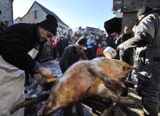 La Saint Cochon rebaptisé, un salon du chiot annulé, merci les animalistes