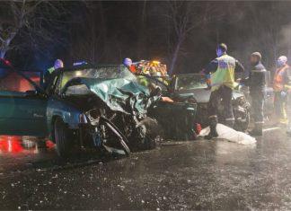 Collision mortelle entre une voiture et sanglier en forêt de Fontainebleau.