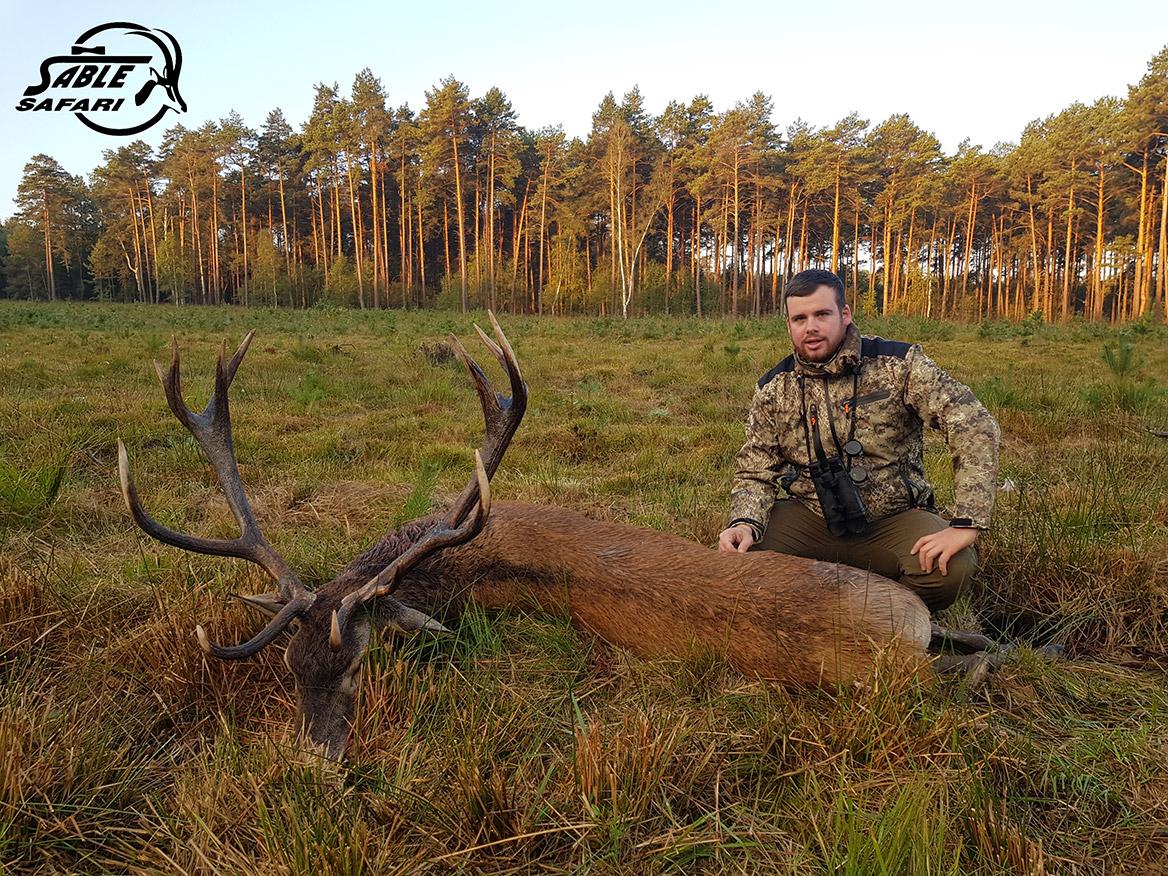 Organisation de chasse au cerf au brame en Pologne : Sable Safaris