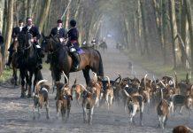 Un projet de loi contre la chasse à courre déposé
