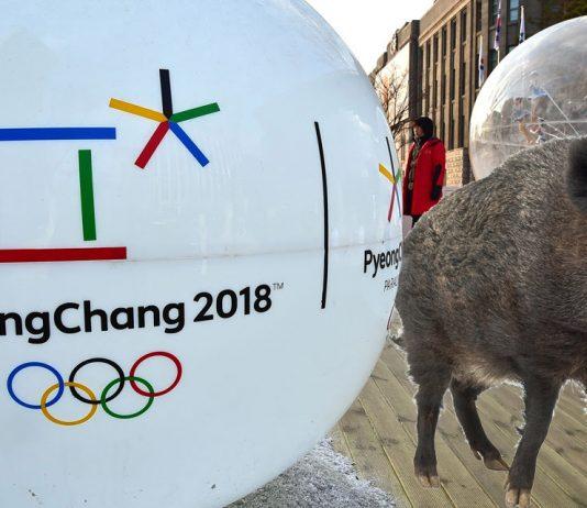 Pyeongchang : la technologie 5G testée pour faire fuir les sangliers !