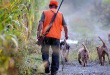 Les chasseurs des landes marre d'être pris pour un « service public »