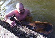 Un homme sauf un chevreuil de la noyade