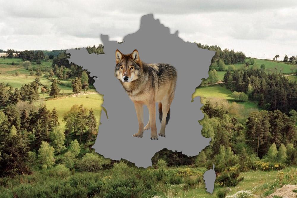 La carte du loup en France : progression de 2013-2018 - Chasse Passion