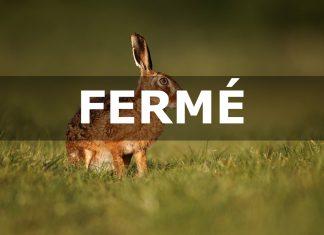 La chasse du lièvre, lapin et de la perdrix suspendue dans l'Aude