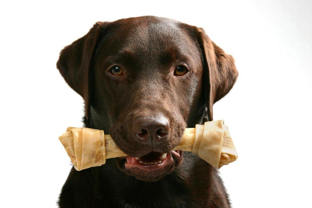 Le danger des friandises à mâcher pour chien