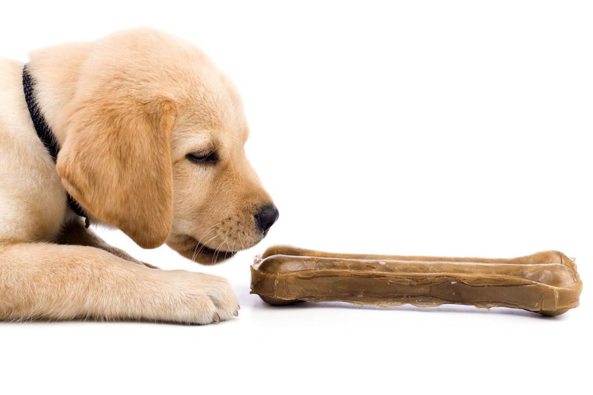 Les os en cuir, ou en peau de buffle, un danger pour les chiens ?