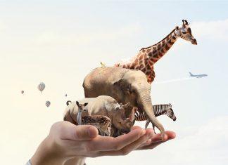 La protection animal, une marotte pour humoriste en mal d'inspiration