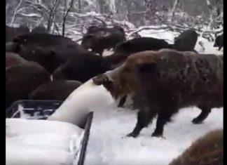 Vidéo chasse