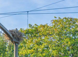 Un nid de pie crée un court-circuit et des retards monstres à la SNCF