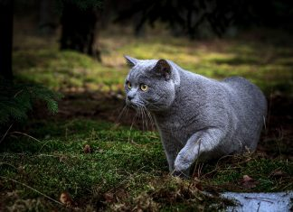 Brigitte Bardot demande une campagne de stérilisations nationale des chats