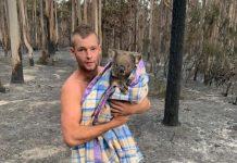 Un chasseur australien à la rescousse des koalas