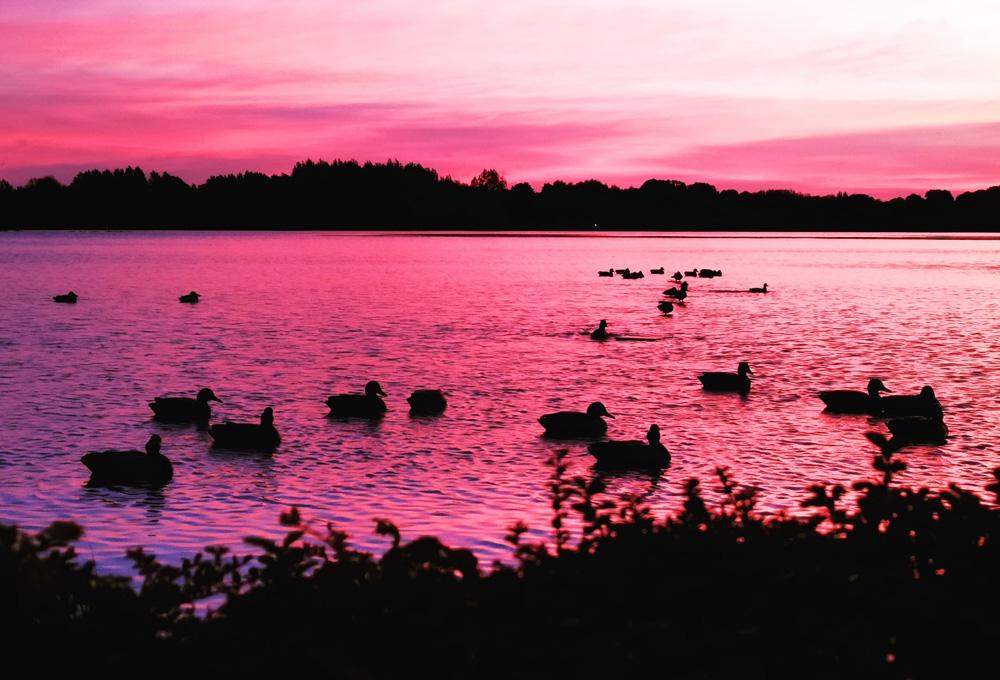 La chasse du gibier d'eau se pratique la nuit, mais pas dans n'importe quelle condition